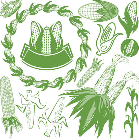 crop  stalks: Corn Collection Illustration