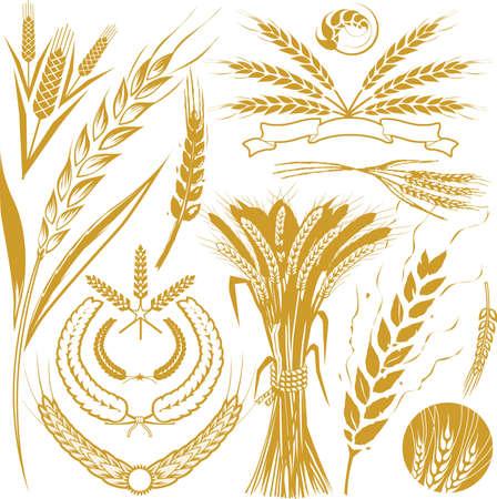 Kolekcja pszenicy Ilustracje wektorowe