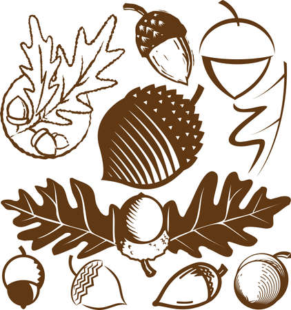 Acorn Collection Stock Vector - 10233413