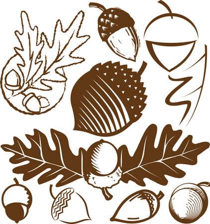 acorns: Acorn Collection