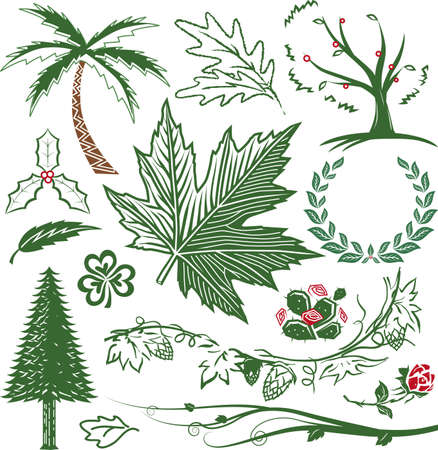 laurel leaf: Greenery Collection Illustration
