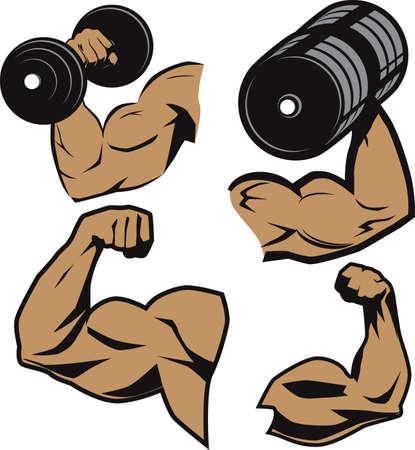 bicep: El levantador de pesas de Armas Vectores