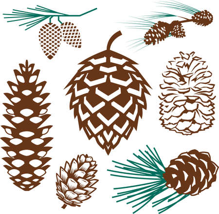 Pinecone Collection Vector