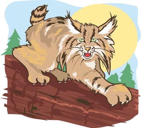 Stalking Lynx