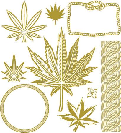 marihuana leaf: Colecci�n de c��amo Vectores