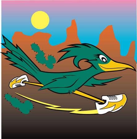 birds desert: Desert Roadrunner