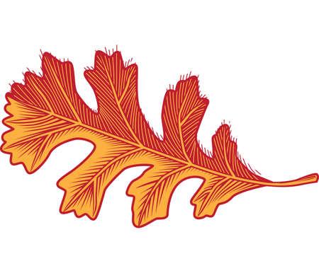 Oak Tree feuilles Banque d'images - 13179846