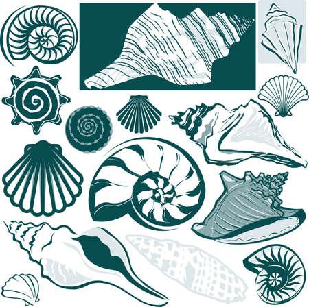Shell コレクション  イラスト・ベクター素材