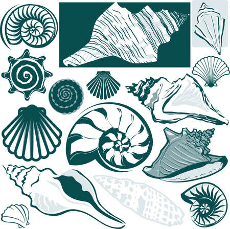 sea shells: Shell Collection Illustration