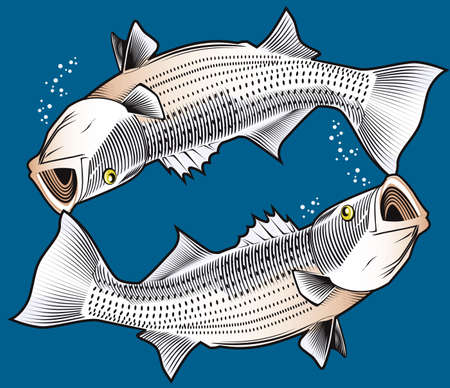 Twin Striped Bass Stock Vector - 13232364