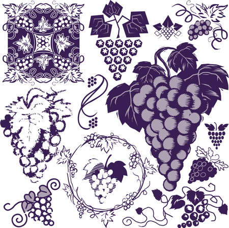 Grape Collection Vector