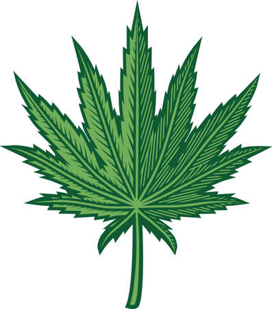 Hemp Leaf Stock Vector - 13453560