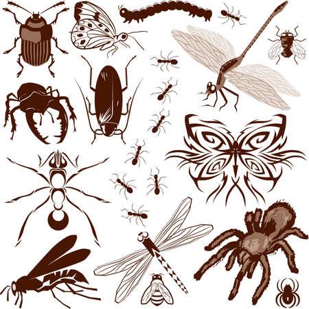 Collection d'insectes Banque d'images - 13453607