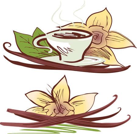 coffee beans: Vanilla Beans Illustration