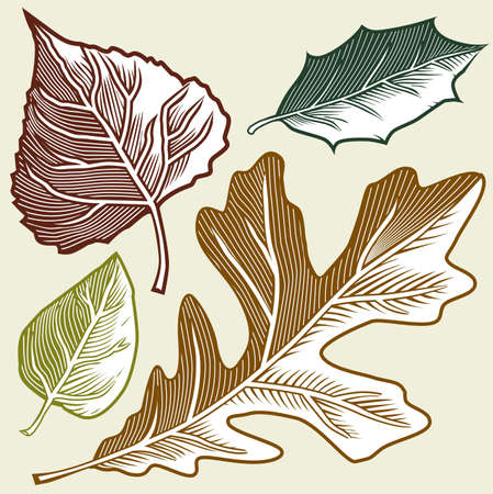 Four Leaves Stock Vector - 17271954