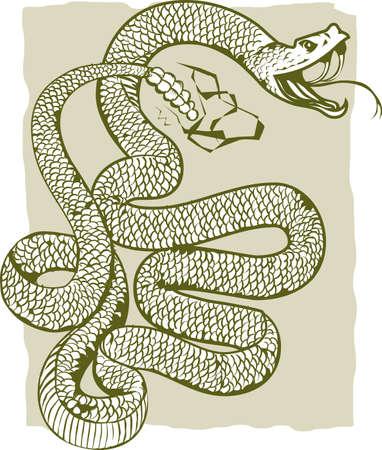 serpiente de cascabel: Rattlesnake Angry