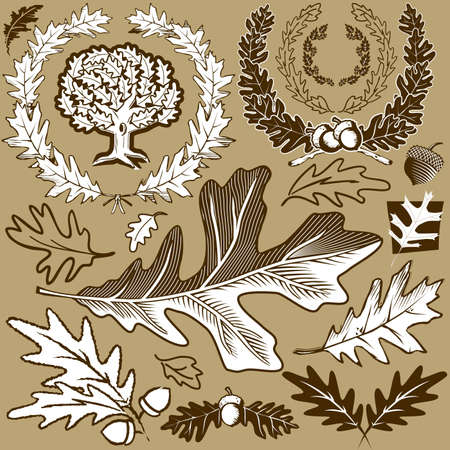 laurel leaf: Oak Leaf Collection Illustration