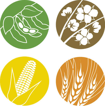 Soybeans, Cotton, Corn and Wheat Illustration