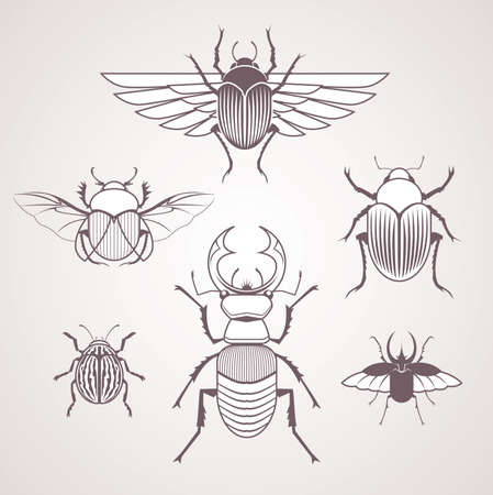 Beetles Vector