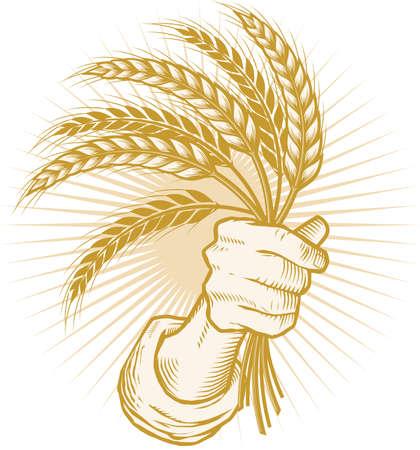 小麦の一握り  イラスト・ベクター素材