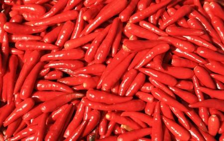 red chilli photo