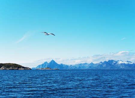 Seagull over Norwegian sea. Summer, sunday photo