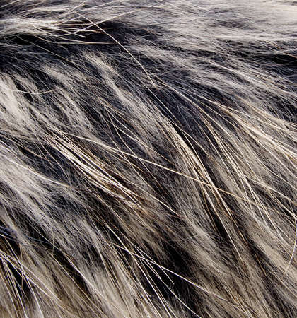 Background of fur for works of art Stock Photo