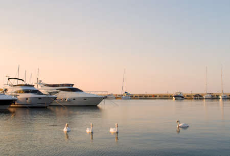 Yachts and white swans in a silent bay photo