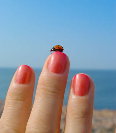 lady beetle: Ladybird on her finger with a manicure