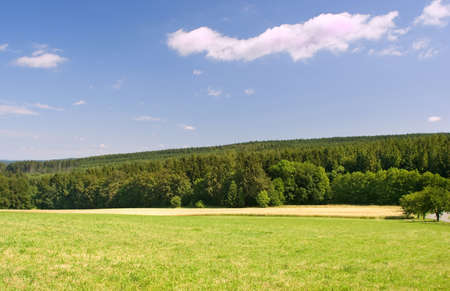 Landscape with the green forest and blue sky