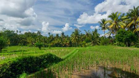 an agricultural district: Rice field near the town of Ubud