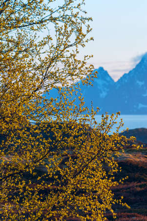 Green bush on background of snow-capped mountains