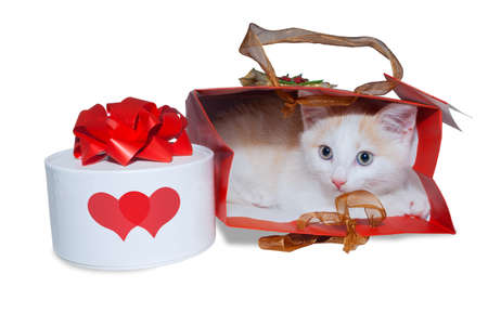 White kitten in a bag and a box with a gift. White box with two red hearts.