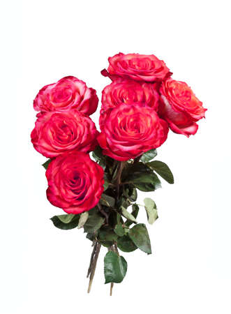 rosas blancas: Ramo de rosas rojas sobre el fondo blanco