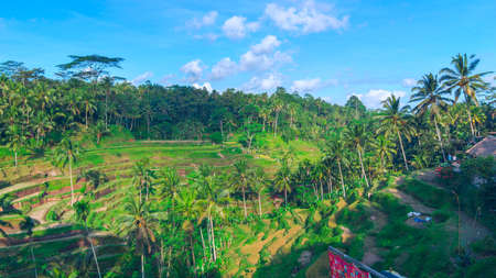 bali province: Horisontal landscape of famous rice terraces near Ubud in Bali, Indonesia