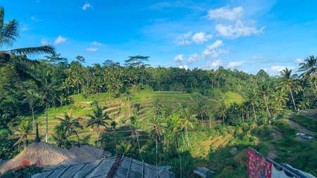 bali province: Landscape of rice terraces near Ubud in Bali, Indonesia Stock Photo