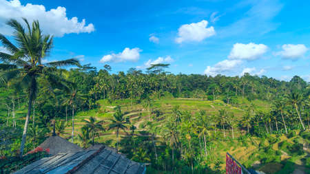 bali province: Landscape of famous rice terraces near Ubud in Bali, Indonesia