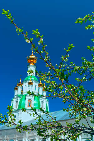 Branch of the apple tree blossoms against white church