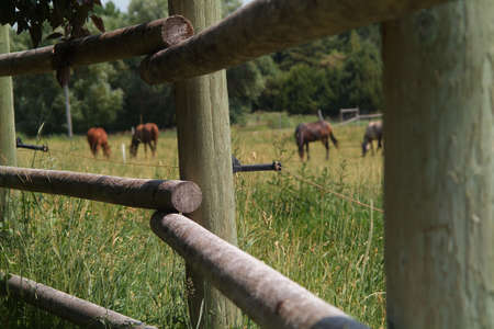 horses behind electric fence attached to poles