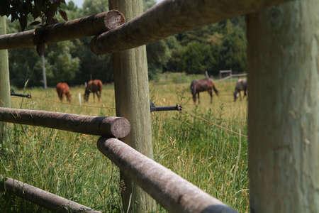 elektrischer Zaun: Pferde hinter Elektrozaun an Pole