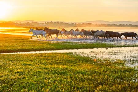 De paarden op de prairie.