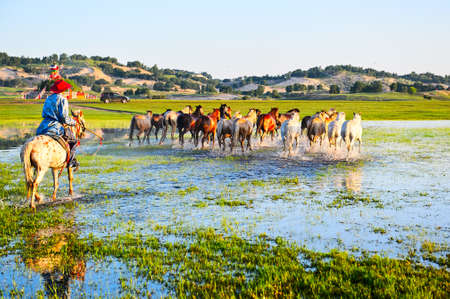 The horses on the prairie. Stock Photo - 75081358