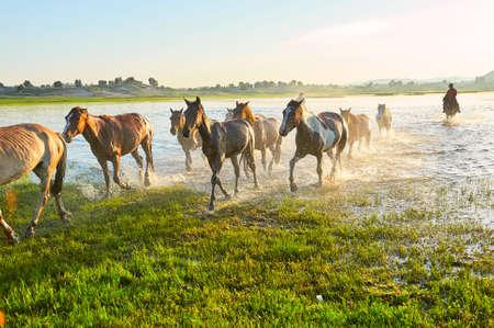 The horses on the prairie.