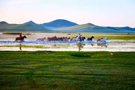 大草原の馬。 写真素材
