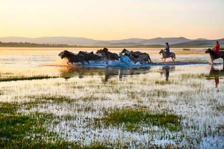 mongolia horse: The horses on the prairie.