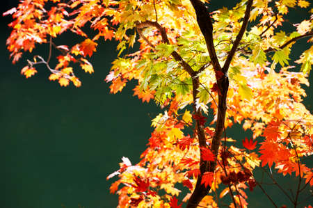 The autumn leaves by pond side Stock Photo