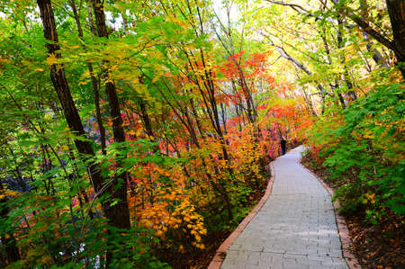 The pathway in the autumn forest