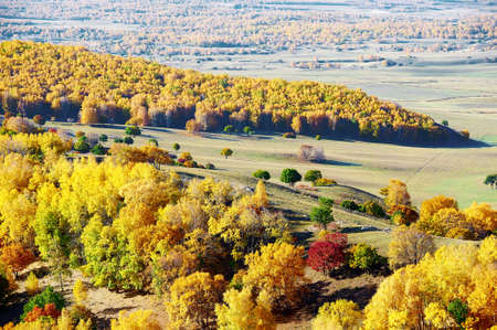 Autumn landscape scenery view of Bashang plateau