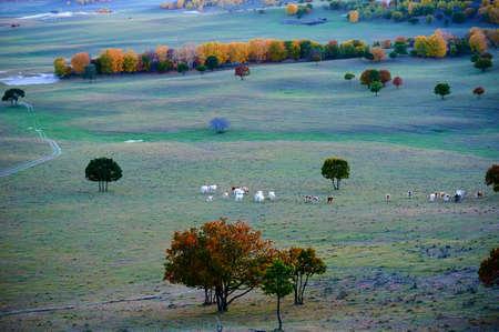 autumn prairie. Stock Photo