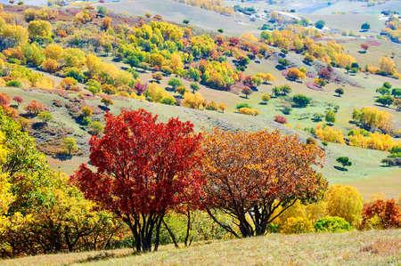 The autumn steppe landscape.